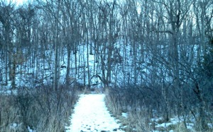 Pat's woods