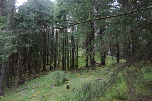 An Torr woodland view