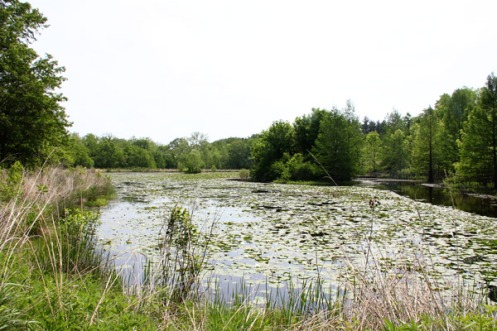ShawNatureReserve-Wetlands